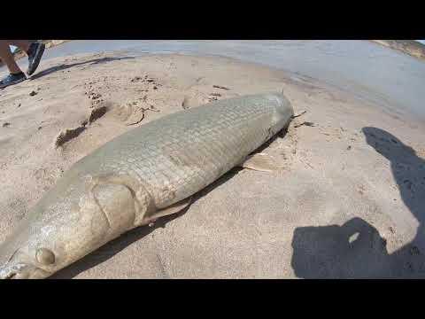 EPIC GAR Fishing Trinity River TX 2020