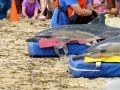 Dolphin Rescue in Provincetown