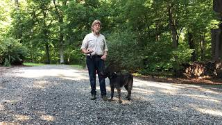 German WireHaired Pointer Puppy Training | Charlotte NC | Izzy