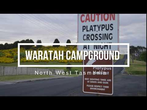 Waratah Campground North West  Tasmania Camping Savage River