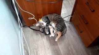 Холодно.Кошка спит на ИБП.