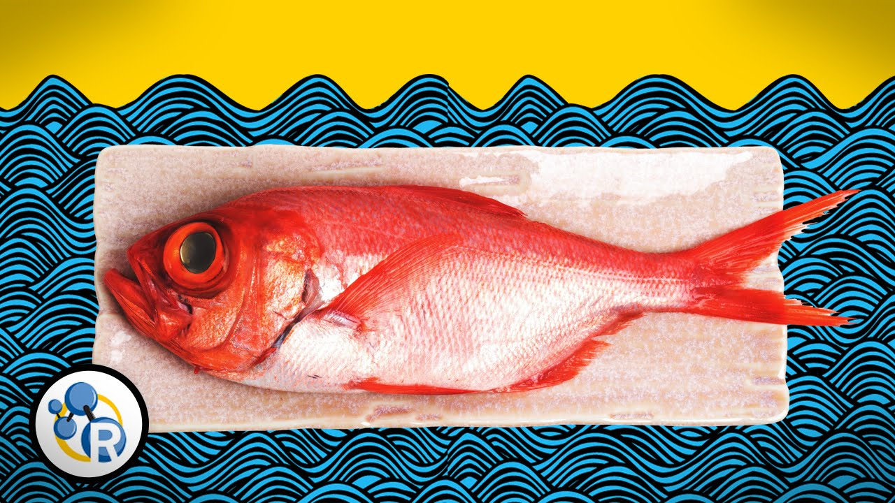 Tips to keep fish in your fridge smelling less fishy | Cosmos