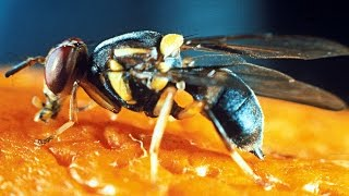 which insect can t get drunk rif 82