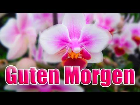orchidee–die-königin-der-blumen...-guten-morgen☕