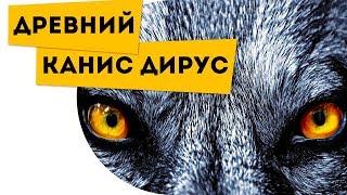 Самый большой волк в мире Ужасный волк Canis dirus Про животных для детей
