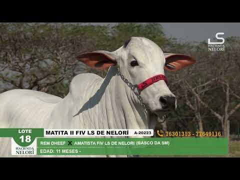 Lote 18 Matita II FIV LS
