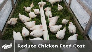 Tips To Reduce Cost Of Chicken Feed - Ama S4:e2