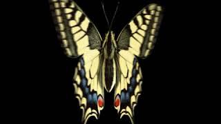 [GIF AOD]Butterfly