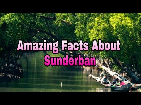 Amazing and Unknown things about Sundarban in Hindi || sundarbans national park ||