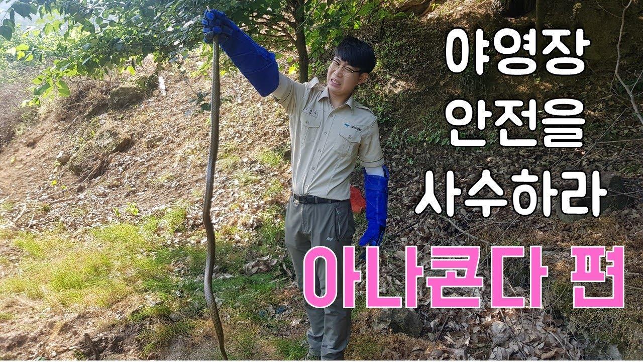 최초공개! 한국의 아나콘다/야영장을 사수하라/국립공원 리얼 다큐