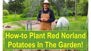 Basic Gardening Tips: Tips and Ideas on How-to Plant Your Red Norland Potatoes Outside