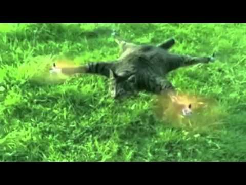 Gato Volador