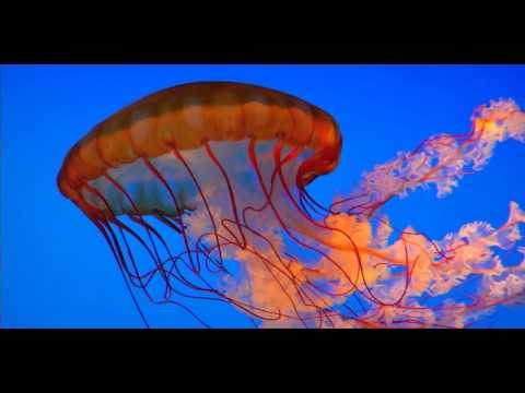 amazing deep sea creatures youtube