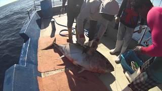 Tuna fishing Maldives