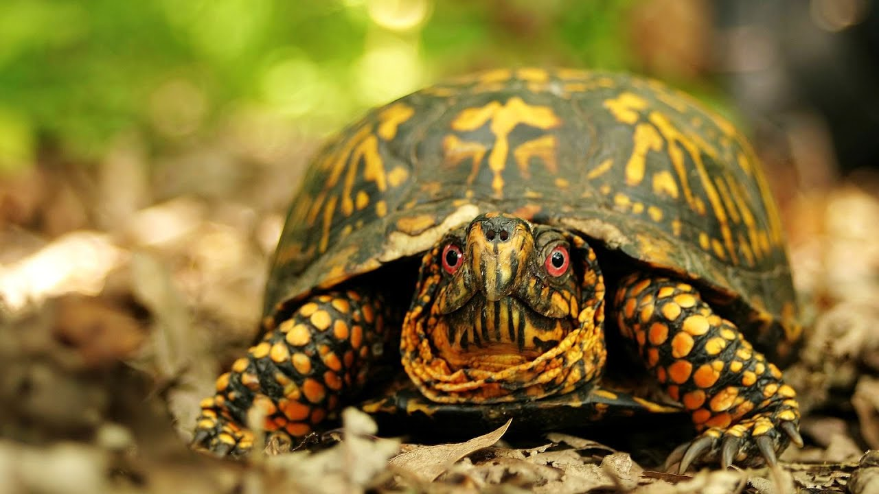 R Turtles Good Pets Is It Legal to Own a P...