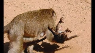 Baby Very Scare, Why Dana mom monkey do Bad on her Baby Donny like this?