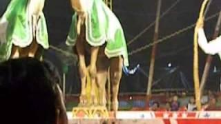 Animal Abuse at Jumbo Circus, Chennai
