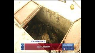 Зоозащитники обнаружили ямы с трупами собак