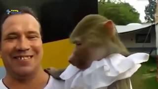 FUNNY VIDEOS 2019 FUNNY ANIMALS