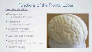 Frontal Lobes Functions