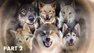 TOP 10 DOGS THAT LOOK LIKE WOLVES - PART 2