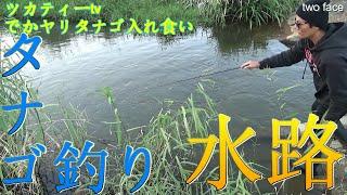 【世界最小の小物釣り】水路でデカヤリタナゴ入れ食い!ランガンタナゴ釣り