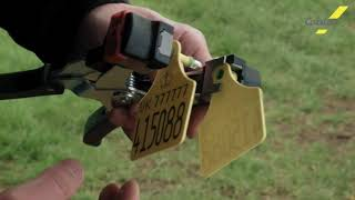 Applying your Approved Registered Cattle Tags