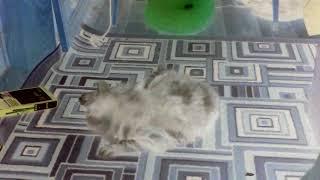 Тупая кошка хочет кота. ЖЕСТЬ.