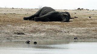 Зимбабве выставляет на продажу диких животных