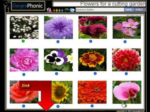 12 flowers for a cutting garden in spring