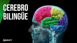 Así te cambia hablar dos idiomas: el cerebro de un bilingüe