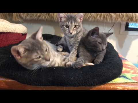 60 seconds of purring kittens