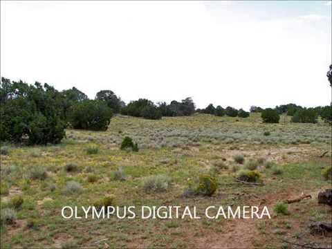 40 Acres Fence Lake, New Mexico For Sale: Only $32,000