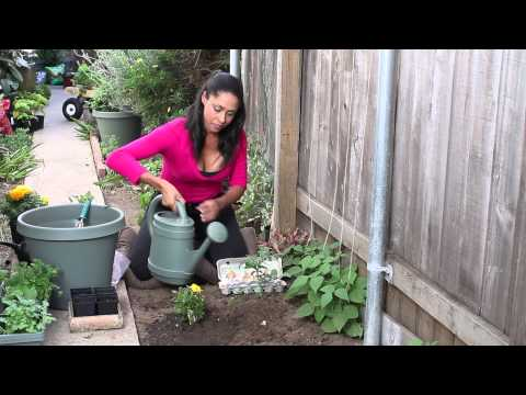 Homemade Eggshell Plant Fertilizer : The Chef