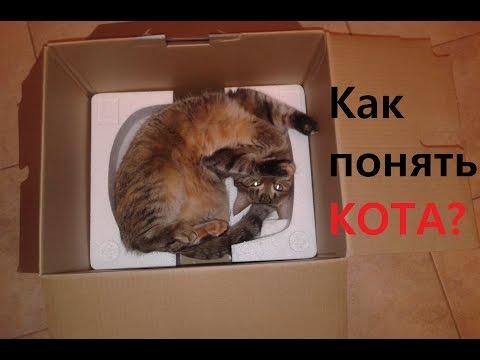 Вопрос: Почему кот любит подставлять живот, чтобы его погладили?