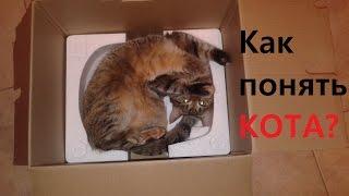 TAG: Как понять кота
