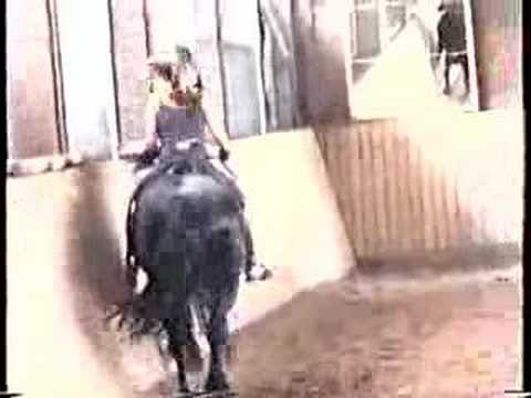 Cute Girl ride a Horse during Sunset from YouTube · Duration:  1 minutes 20 seconds