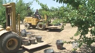 A Longtime Apricot Grower