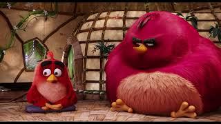 Angry Birds в кино. Бомб бомбит! (Angry Birds) 2016   [MultTime]