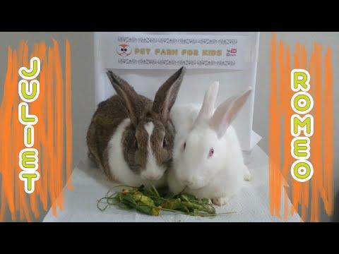 bunny-romeo-and-juiet