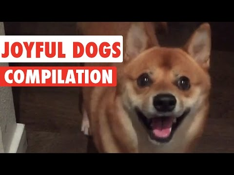 Joyful Dogs Video Compilation 2016