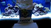Vertex Mocean on Marine Aquatics Demo Tank - YouTube