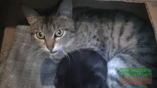 Дикая кошка дерется со мной защищая своего котенка.