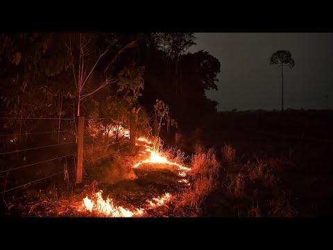 رائحة الموت تفوح من غابات الأمازون  - نشر قبل 3 ساعة