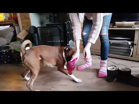 Boxer Dogs Broken!