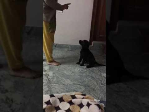 Aari - Practicing the wait command