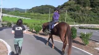 五島自動車学校 馬で教習コースを覚える