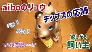 アイボのリュウ🐶いつまで続く!?チップスの応酬【aibo】【子犬】