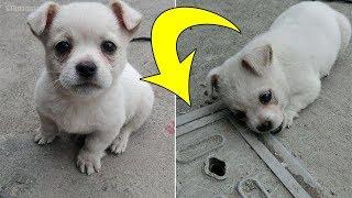 Cachorro insiste en estar al lado de esta tapa de pozo, pronto el dueño descubre lo más desgarrador. thumbnail