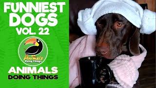 🐶 Try Not To Laugh Funny Dogs Vol. 22 | Animals Doing Things